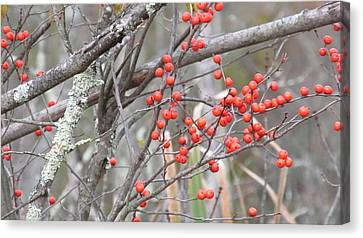 Red Berry Branch Canvas Print