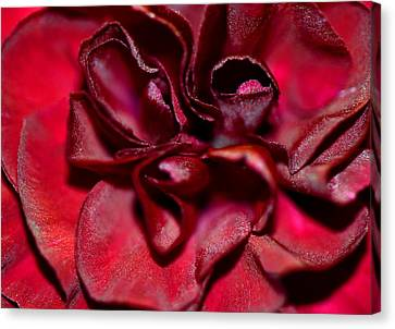 Red Carnation With Heart Canvas Print by Sandi OReilly