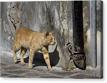 Canvas Print featuring the photograph Red Cat In Burano by Raffaella Lunelli