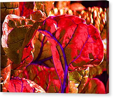 Red Chard Canvas Print by Rory Sagner