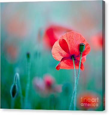 Red Skies Canvas Print - Red Corn Poppy Flowers 04 by Nailia Schwarz