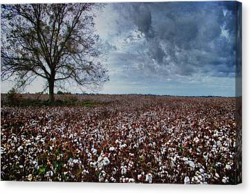 Red Cotton And The Tree Canvas Print