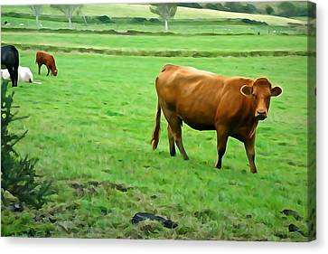 Canvas Print featuring the photograph Red Cow by Charlie and Norma Brock