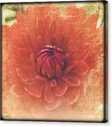 Canvas Print featuring the photograph Red Dahlia by Alana Ranney