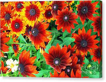 Canvas Print featuring the photograph Red Daisies  by Bill Thomson