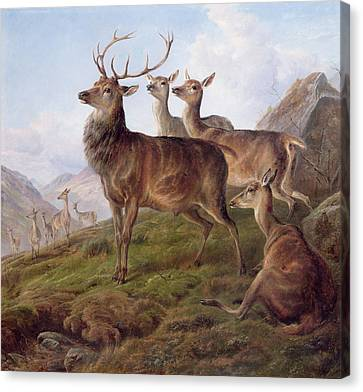 Red Deer In A Highland Landscape Canvas Print by Charles Jones
