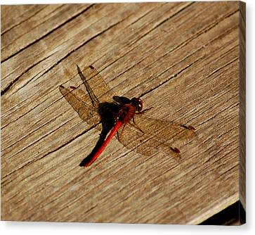 Red Dragon Fly Canvas Print