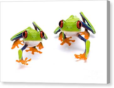 Red-eyed Treefrogs Walking Canvas Print by Mark Bowler and Photo Researchers