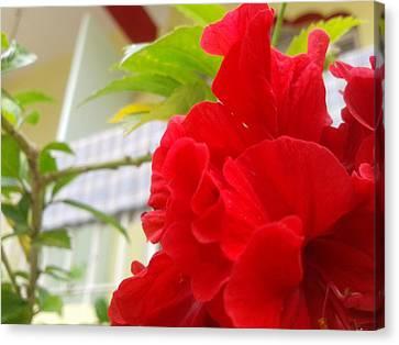 Red Flower Canvas Print by Chetan Ranjan