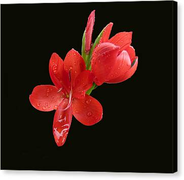 Canvas Print featuring the photograph Red Flower by Lynn Bolt