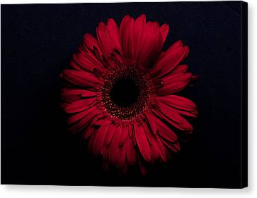 Red Flower Canvas Print by Ron Smith