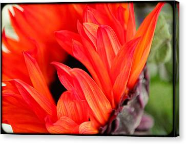 Canvas Print - Red Flower by William and Magdalena Green