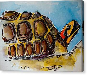 Red Foot Tortoise Canvas Print by Richard Greene