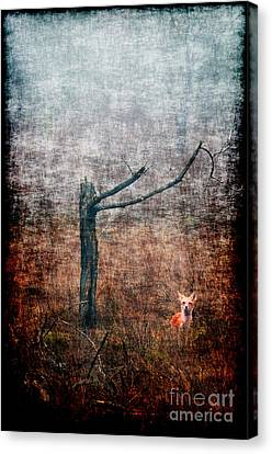 Canvas Print featuring the photograph Red Fox Under Tree by Dan Friend