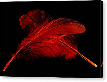 Red Ghost On Black Canvas Print by Steve Purnell