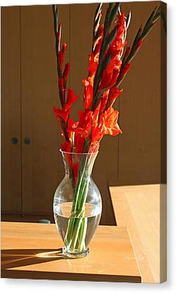 Red Glads Canvas Print by Suzanne Gaff
