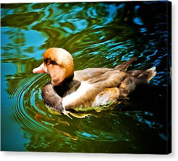 Red Head Duck Canvas Print by Mickey Clausen