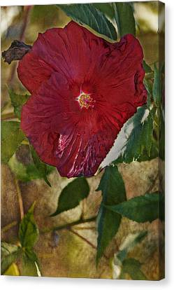 Red Hibiscus Canvas Print by Bonnie Bruno