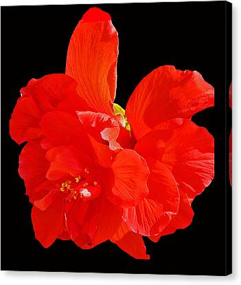 Canvas Print featuring the photograph Red Hibiscus by Cindy Manero