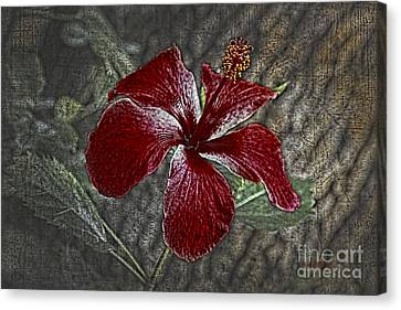 Red Hibiscus Decked Out Canvas Print by Deborah Benoit