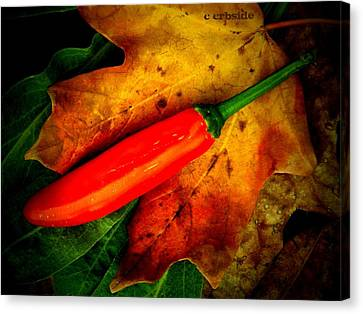 Red Hot Chili Pepper Canvas Print by Chris Berry