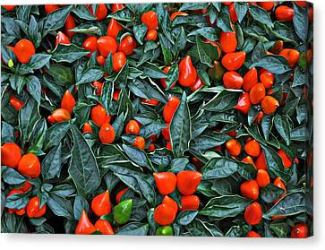 Red Hots Canvas Print by Mary Machare