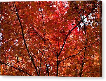 Gatlinburg Tennessee Canvas Print - Red Leaves Black Branches by Rich Franco