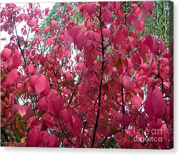 Red Leaves I Canvas Print by Alys Caviness-Gober