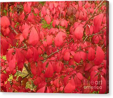 Red Leaves Iv Canvas Print by Alys Caviness-Gober