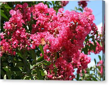 Canvas Print featuring the photograph Red Lilac Bush by Michael Waters