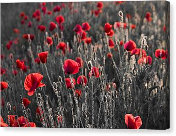 Red Canvas Print by Octavian Chende