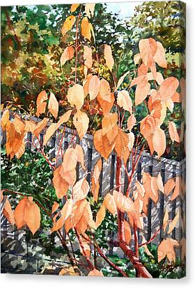 Red Osier Canvas Print by Peter Sit