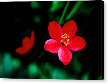 Red Petaled Dream Canvas Print