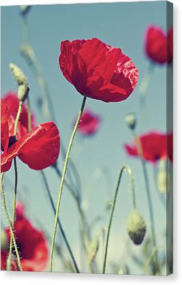 Red Poppies Against Blue Sky Canvas Print