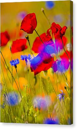 Red Poppies And Wildflowers In A Field, Soft Focus Canvas Print by Bob Pool