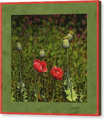 Red Poppies Canvas Print by Bonnie Bruno