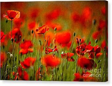Red Poppy Flowers 02 Canvas Print