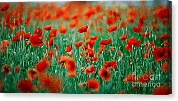 Red Poppy Flowers 04 Canvas Print