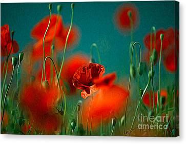 Red Poppy Flowers 05 Canvas Print by Nailia Schwarz