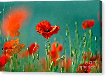 Red Poppy Flowers 06 Canvas Print by Nailia Schwarz