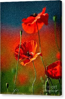 Red Poppy Flowers 08 Canvas Print by Nailia Schwarz