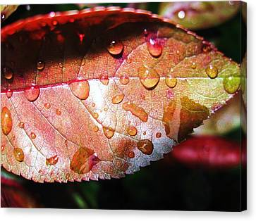 Red Rain Canvas Print by Todd Sherlock