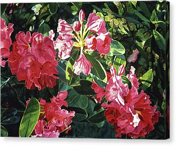 Red Rhodos Canvas Print by David Lloyd Glover