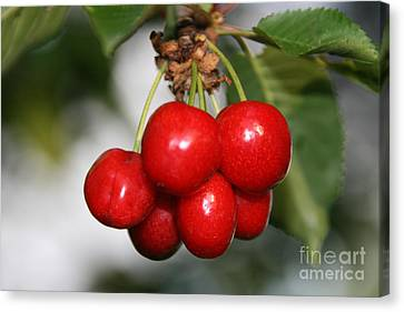 Canvas Print featuring the photograph Red Ripe Cherries by Joan McArthur