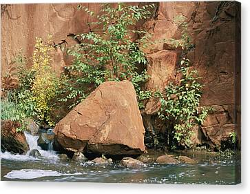 Red Rocks, Fall Colors And Creek, Oak Canvas Print by Rich Reid