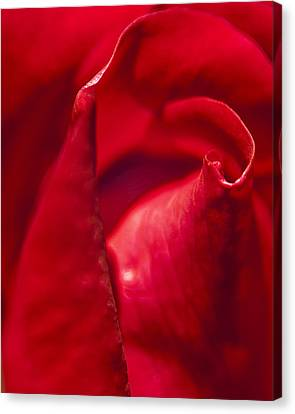Red Rose Close Canvas Print
