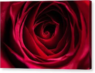 Red Rose Canvas Print by Matt Malloy