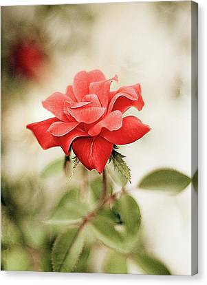 Red Leaf Canvas Print - Red Rose by Natalia Ganelin