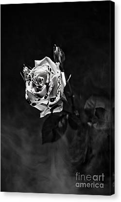 Red Rose Canvas Print by Randall  Cogle
