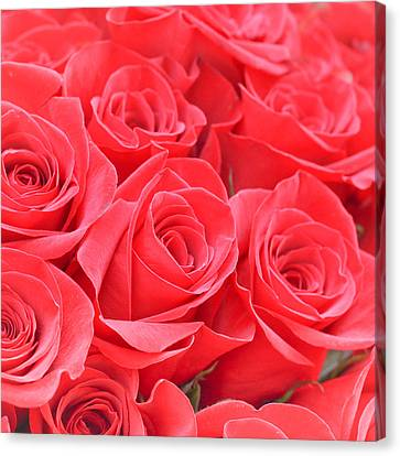 Florid Canvas Print - Red Roses by Tom Gowanlock
